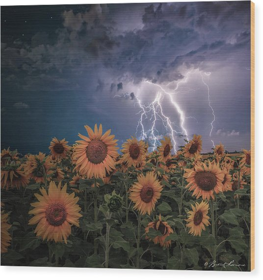 Sunflowers In Adversity Wood Print by Brent Shavnore
