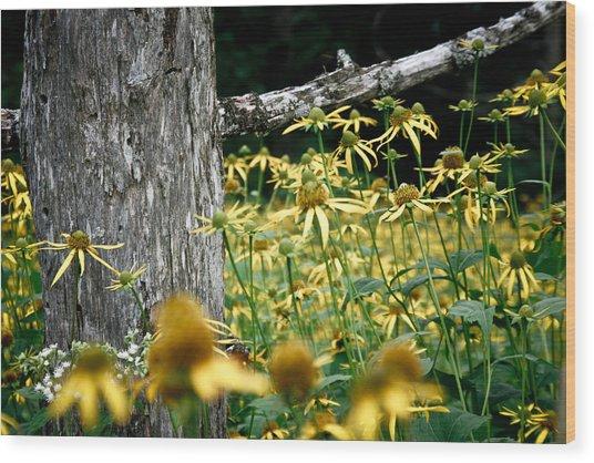 Sunflowers In North Carolina 2 Wood Print by Jonathan Hansen