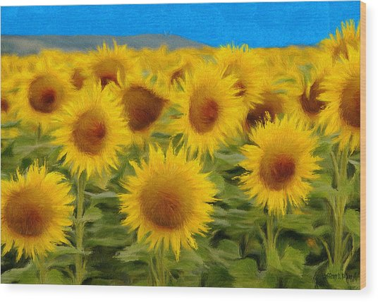 Sunflowers In The Field Wood Print