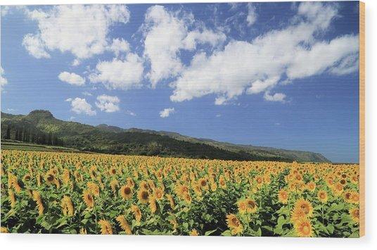 Sunflowers In Waialua Wood Print