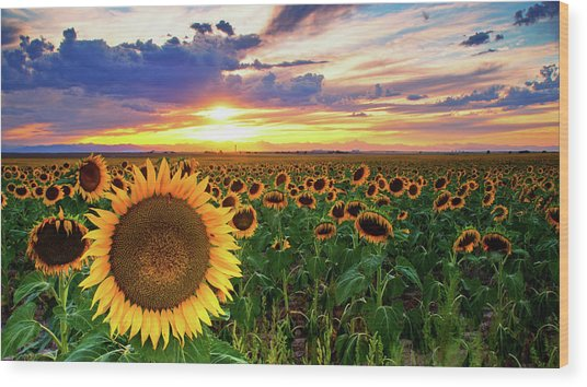 Sunflowers Of Golden Hour Wood Print