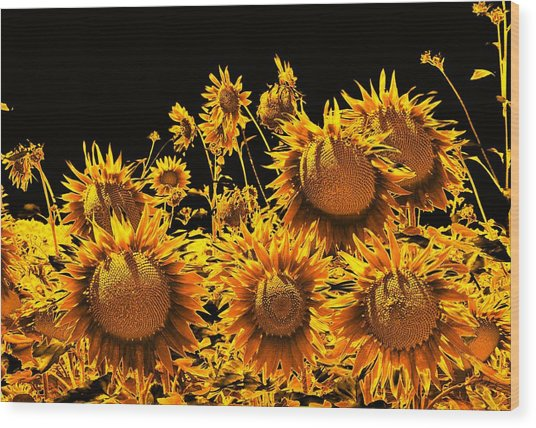 Sunflowers Up Front And Personal Wood Print