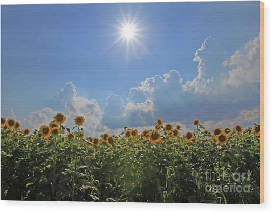 Sunflowers With Sun And Clouds 1 Wood Print