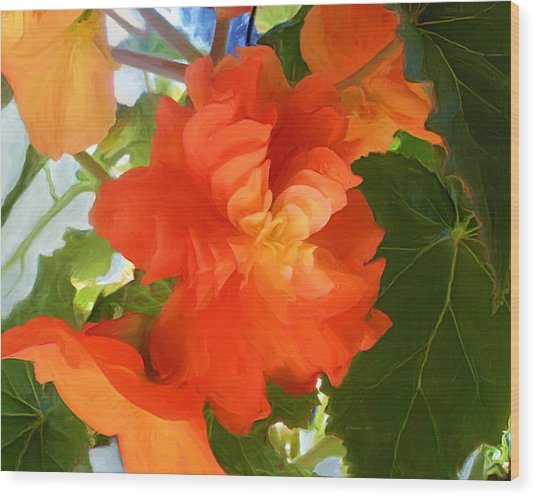 Sunkissed Orange Begonias Wood Print