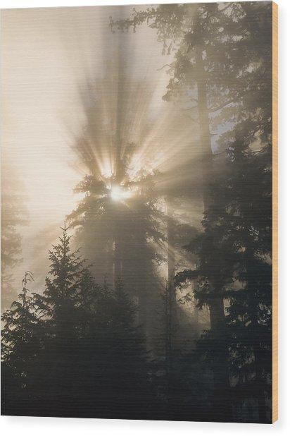 Sunlight And Fog Wood Print