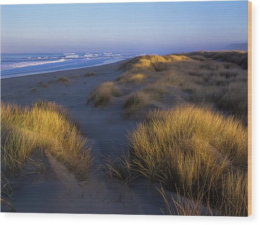 Sunlight On The Beach Grass Wood Print