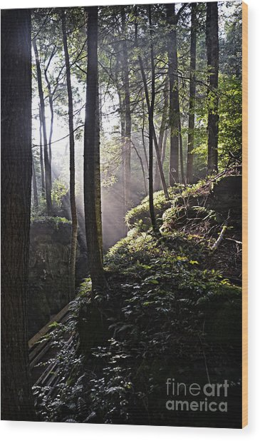Sunlight Through Trees At Beartown State Park 3129c Wood Print
