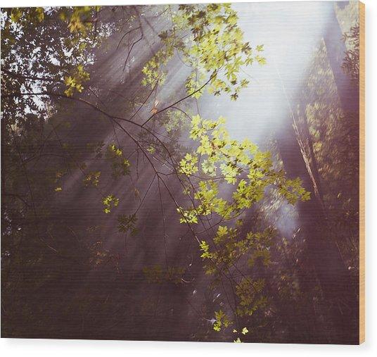Sunlit Beauty Wood Print