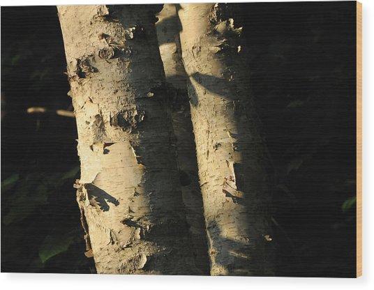 Sunlit Birch Wood Print