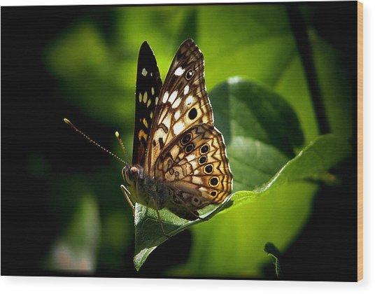 Sunlit Butterfly Wood Print by Karen Scovill