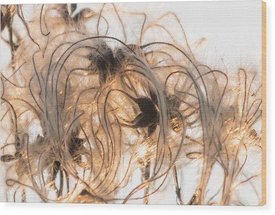 Sunlit Clematis Seeds Wood Print