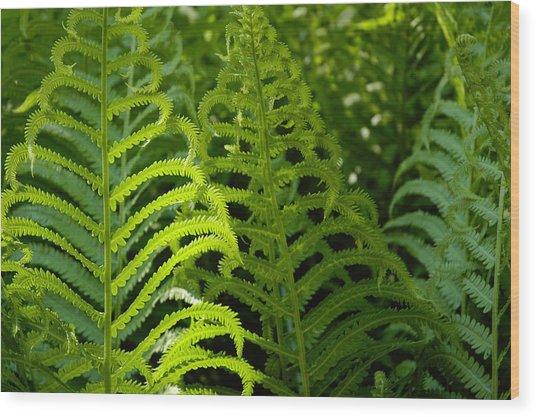 Sunlit Fern Wood Print