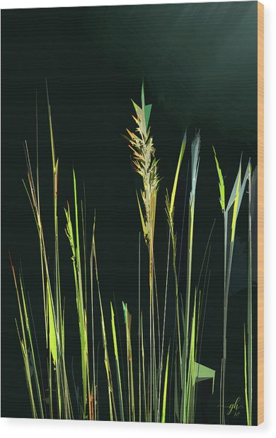 Sunlit Grasses Wood Print