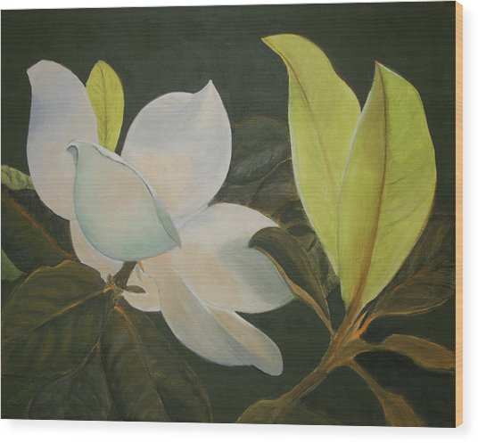 Sunlit Magnolia Wood Print