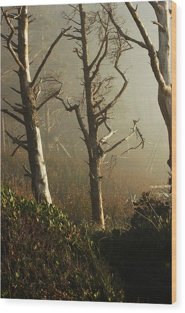 Sunlit Morning Wood Print