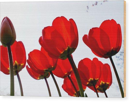Sunlit Petals Wood Print by Sonja Anderson