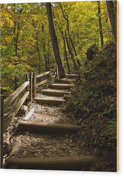 Sunlit Trail Wood Print