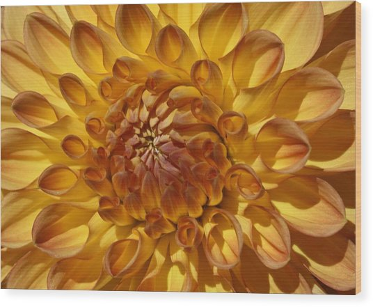 Sunny Delight Wood Print by Monnie Ryan