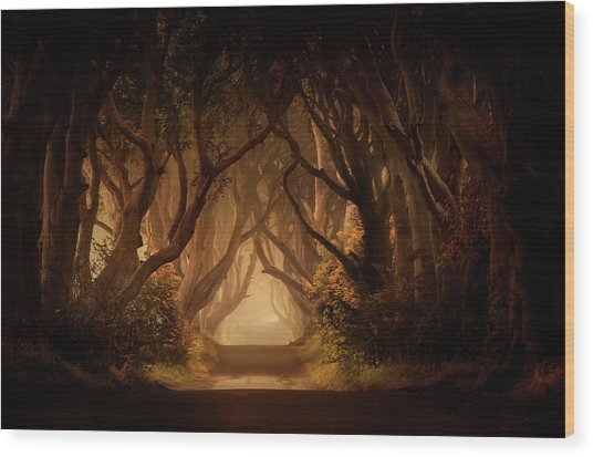 Sunny Morning In Dark Hedges Wood Print