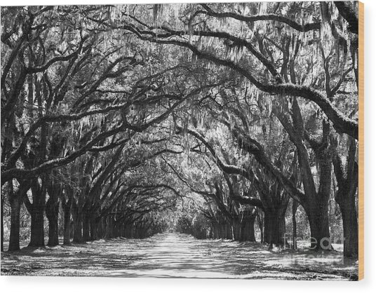 Sunny Southern Day - Black And White Wood Print