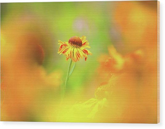 Sunny Spirit Wood Print