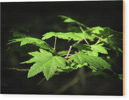 Sunny Summer Maple Wood Print