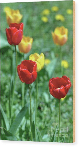 Sunny Tulips Wood Print