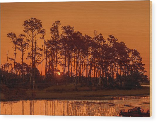 Sunrise Along A Tree Line Wood Print