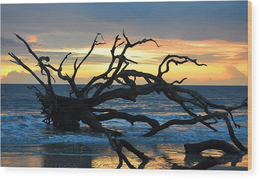 Sunrise At Driftwood Beach 1.1 Wood Print
