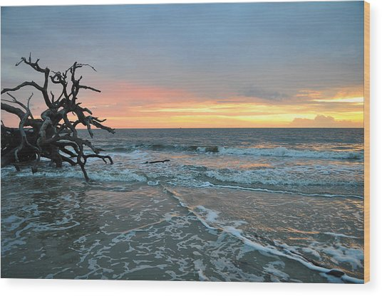 Sunrise At Driftwood Beach 1.3 Wood Print