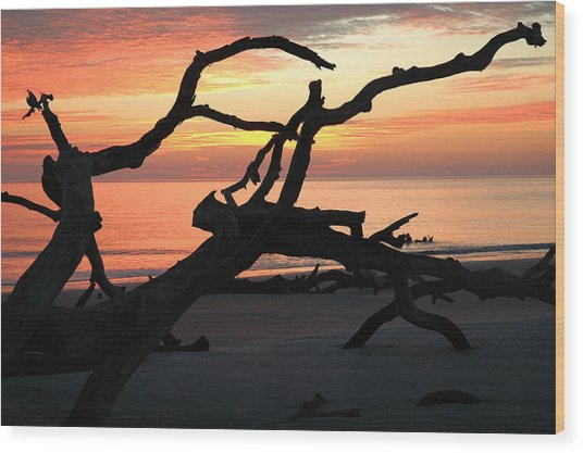 Sunrise At Driftwood Beach 3.1 Wood Print