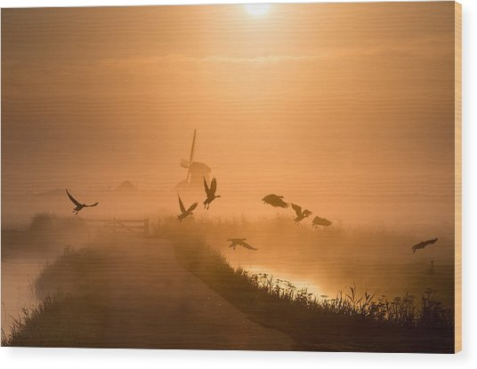 Sunrise Flight Wood Print