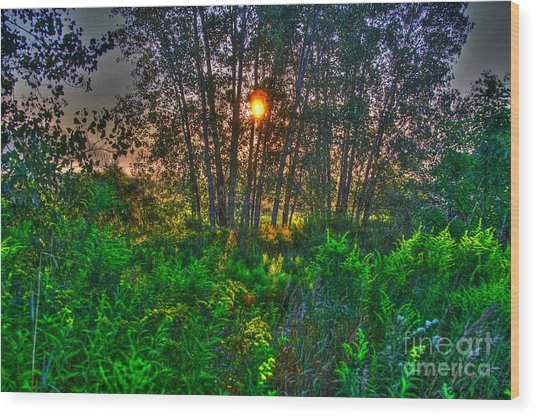 Sunrise In The Swamp-4 Wood Print by Robert Pearson