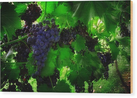 Sunrise In The Vineyard Wood Print