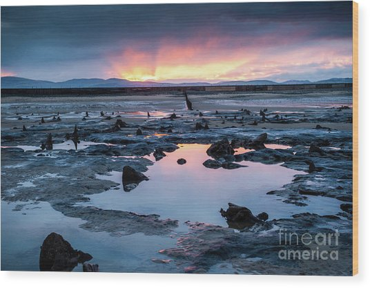 Sunrise Over The Bronze Age Sunken Forest At Borth On The West Wales Coast Uk Wood Print