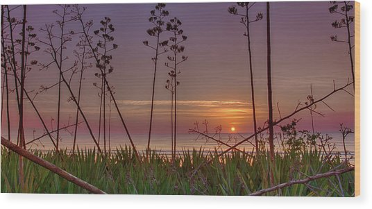 Sunrise Palm Blooms Wood Print