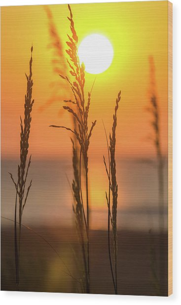Sunrise Serenity Wood Print by AM Photography