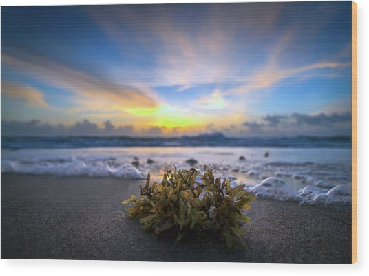 Sunrise Shoreline Wood Print