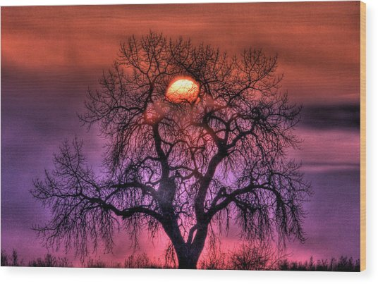 Sunrise Through The Foggy Tree Wood Print
