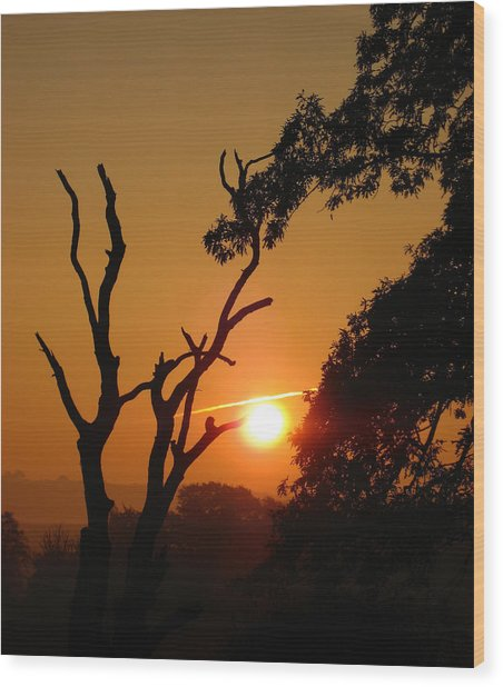 Sunrise Trees Wood Print