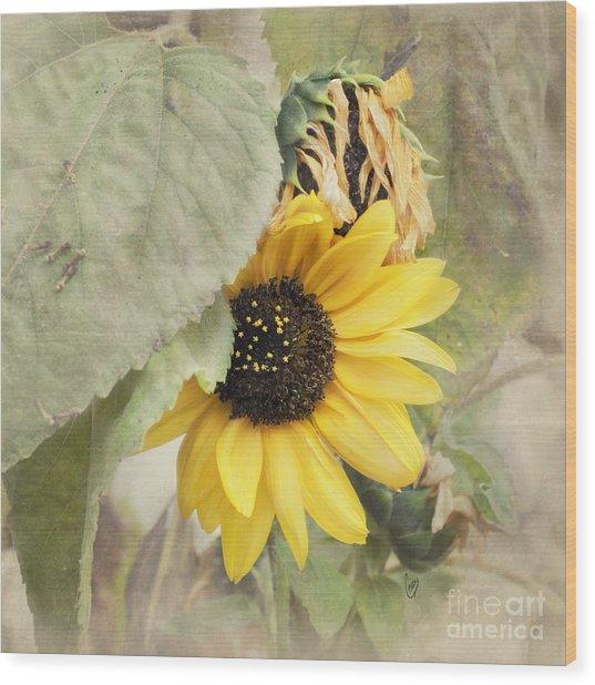 Last Sunflower Wood Print