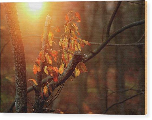 Sunset #8 Wood Print