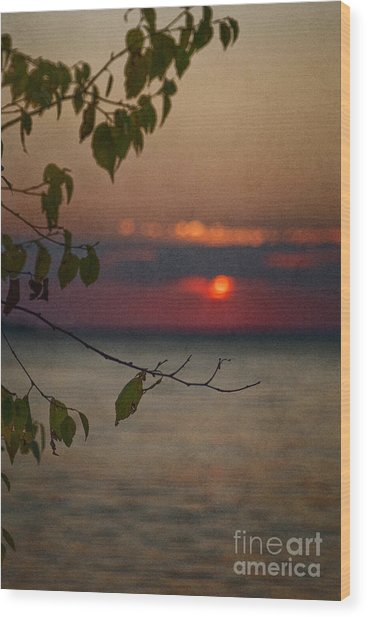 Sunset And Branches Wood Print