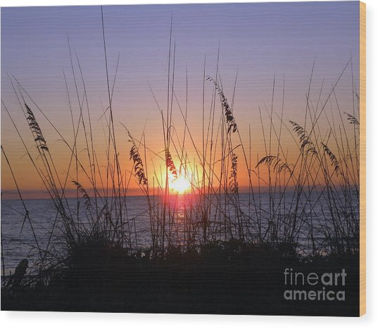 Sunset And Seaoats Wood Print