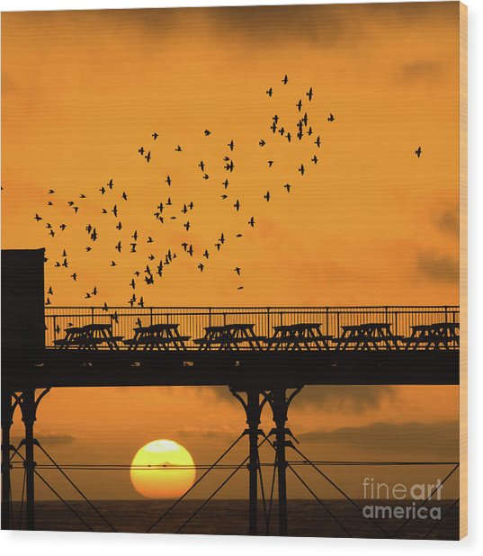 Sunset And Starlings In Aberystwyth Wales Wood Print
