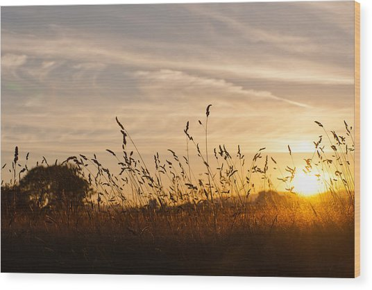 Sunset And Wheat Field Wood Print
