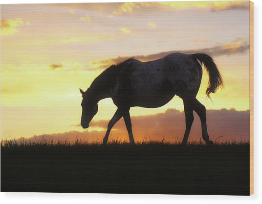 Sunset Appy Wood Print