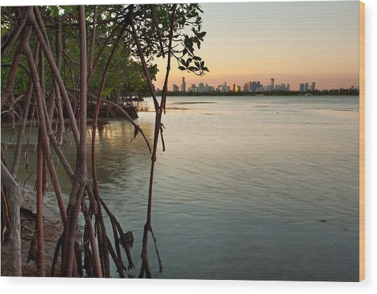 Sunset At Miami Behind Wild Mangrove Forest Wood Print by Matt Tilghman
