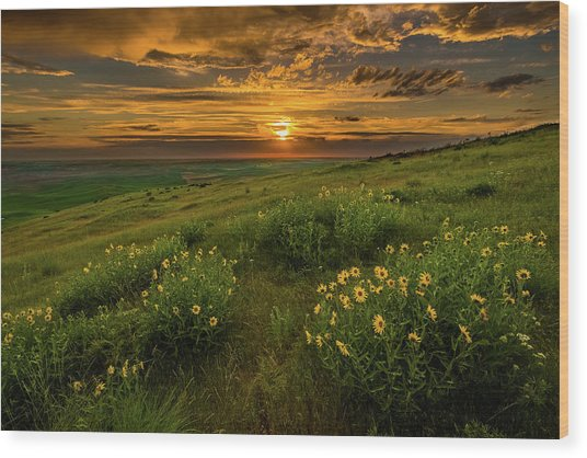 Sunset At Steptoe Butte Wood Print