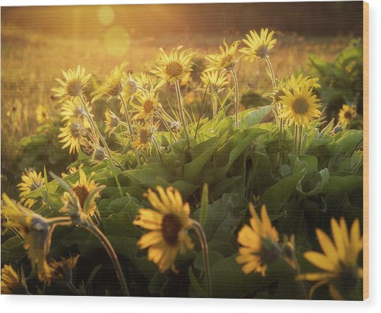 Sunset Balsam Wood Print